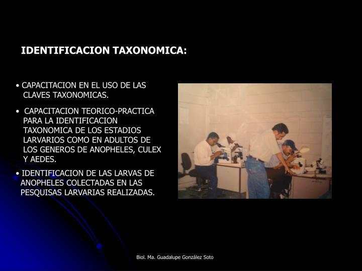 IDENTIFICACION TAXONOMICA: