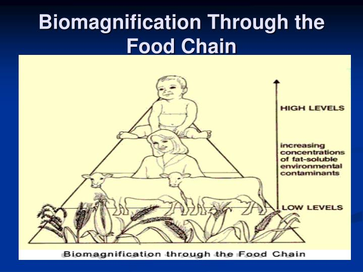 biomagnification through the food chain