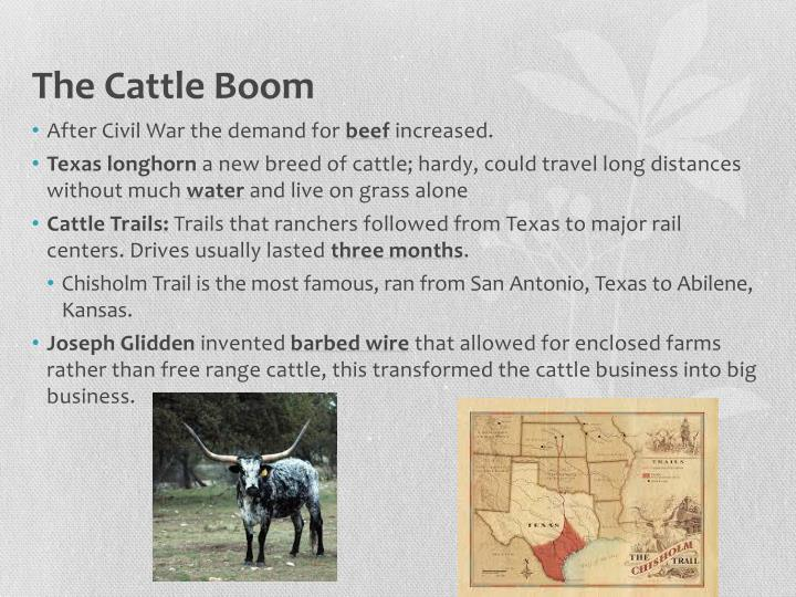 The Cattle Boom