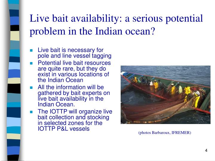 Live bait availability: a serious potential problem in the Indian ocean?