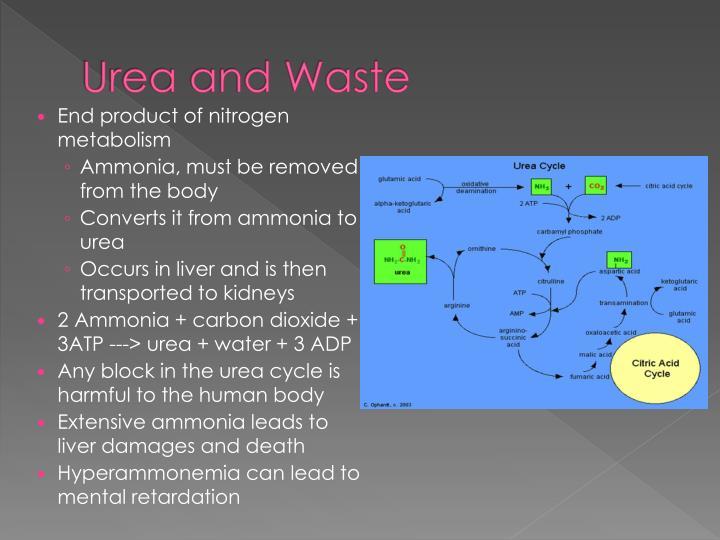 Urea and Waste