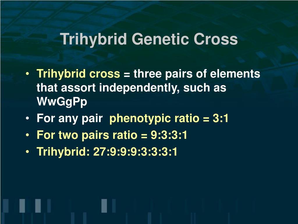 Trihybrid test cross genotypic ratio