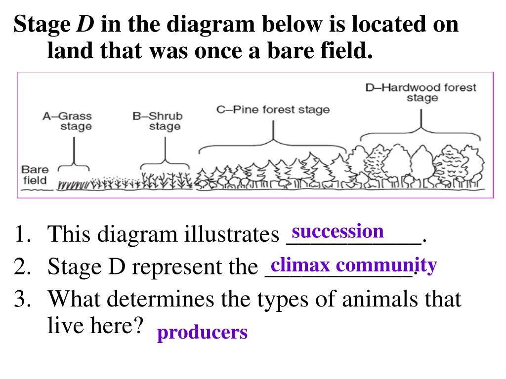 Which Of The Following Statements Describes The Evolution
