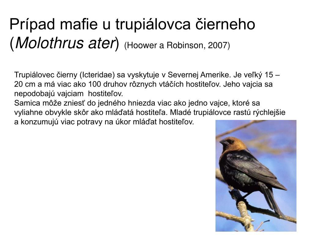 mladé mláďatá veľké vtáky