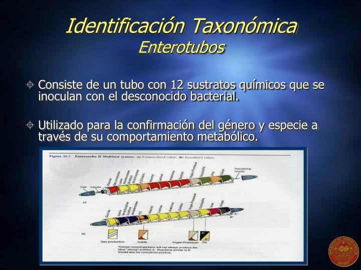 Identificación Taxonómica