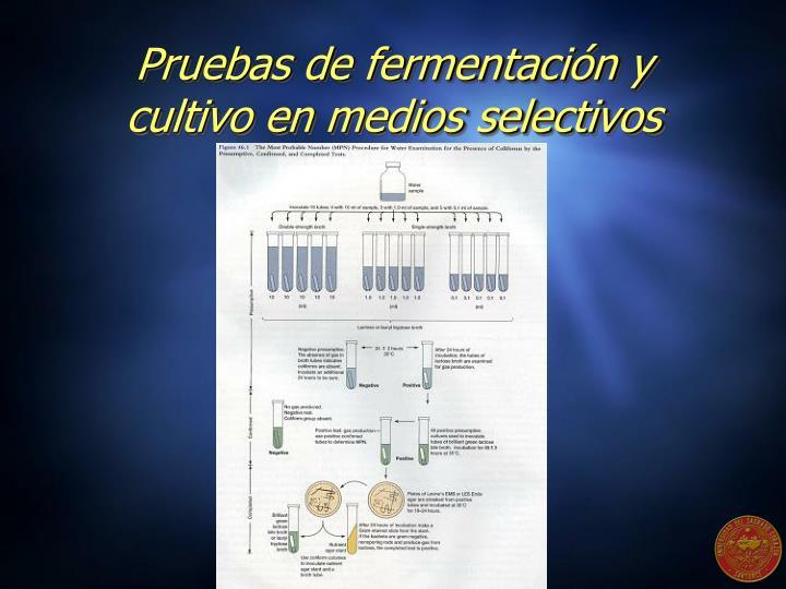 Pruebas de fermentación y cultivo en medios selectivos