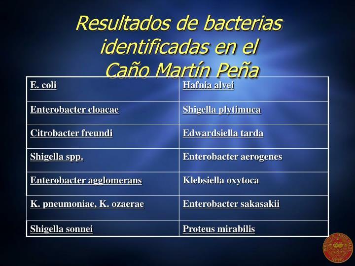 Resultados de bacterias identificadas en el