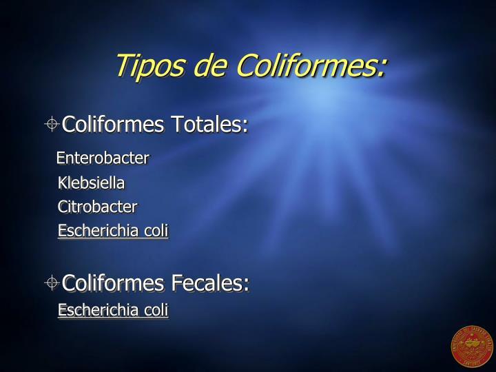 Tipos de Coliformes: