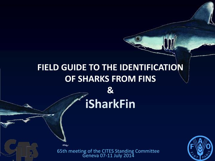 field guide to the identification of sharks from fins isharkfin n.