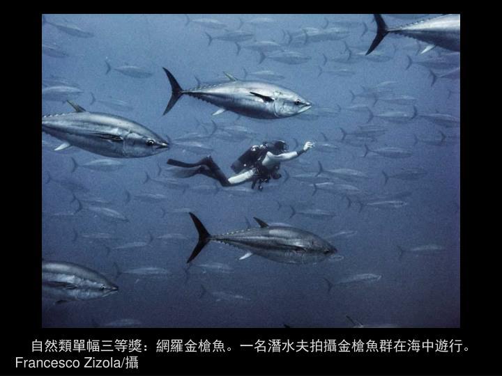 自然類單幅三等獎:網羅金槍魚。一名潛水夫拍攝金槍魚群在海中遊行。