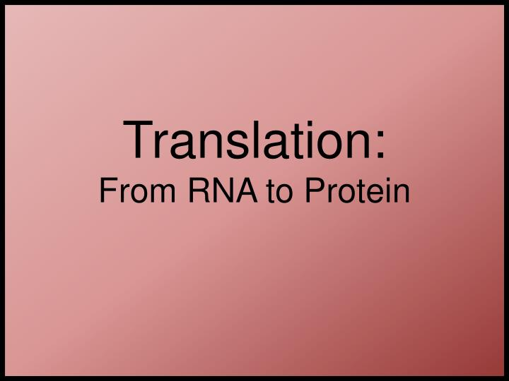 translation from rna to protein n.
