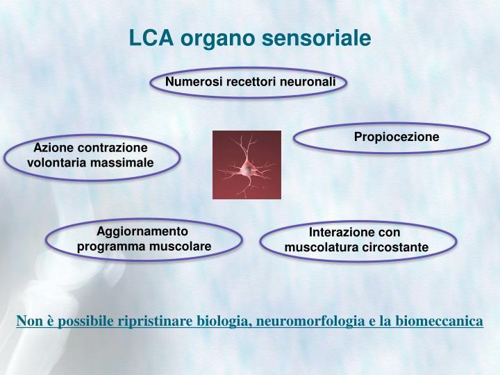 LCA organo sensoriale