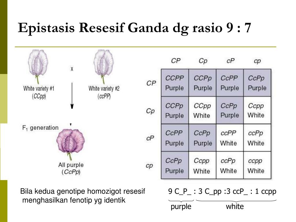 Ppt Interaksi Gen Powerpoint Presentation Free Download Id 3493970