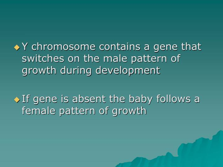 Y chromosome contains a gene that switches on the male pattern of growth during development