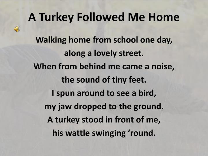 a turkey followed me home n.