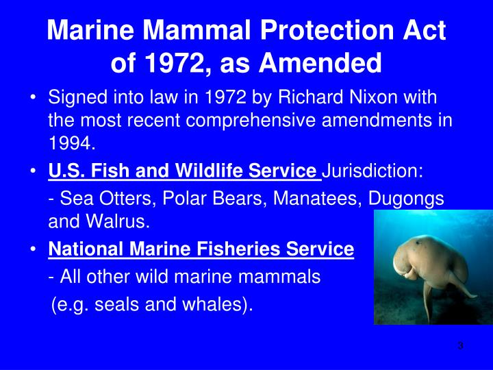 marine mammals essay Marine mammals are mammals that spend most of their lives in the seas they include the cetaceans (whales and dolphins), pinnipeds (seals, sea lions, and walrus), sirenians (manatees and dugongs), sea otters, and even the polar bear.