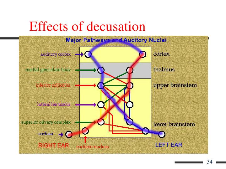 Effects of decusation
