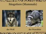 s ugetiere mammals12