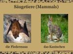 s ugetiere mammals15