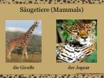 s ugetiere mammals5