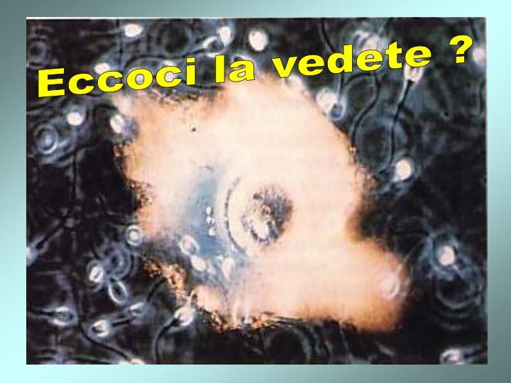 L'ovulo