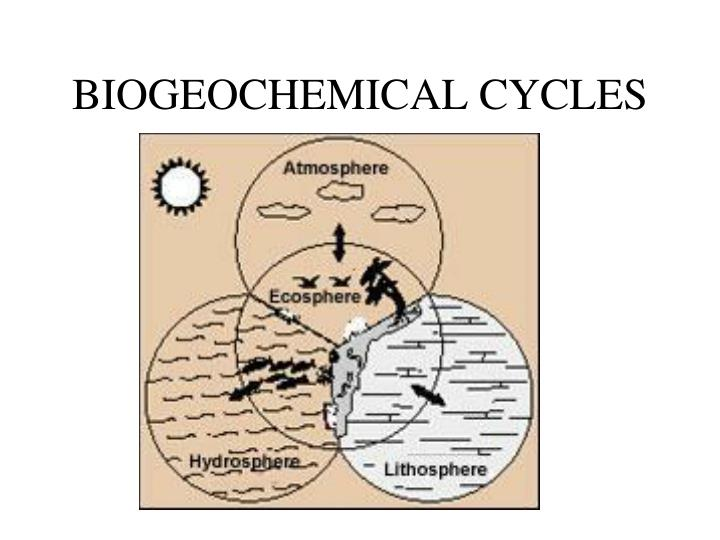 describe biogeochemical cycles carbon nitrogen essay Discuss the biogeochemical cycles of water, carbon, nitrogen, phosphorus, and sulfur energy flows directionally through ecosystems, entering as sunlight (or.