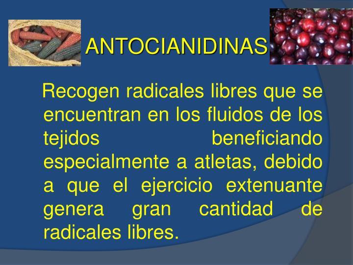 ANTOCIANIDINAS
