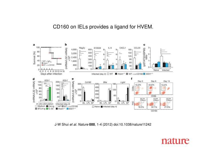 CD160 on IELs provides a ligand for HVEM.