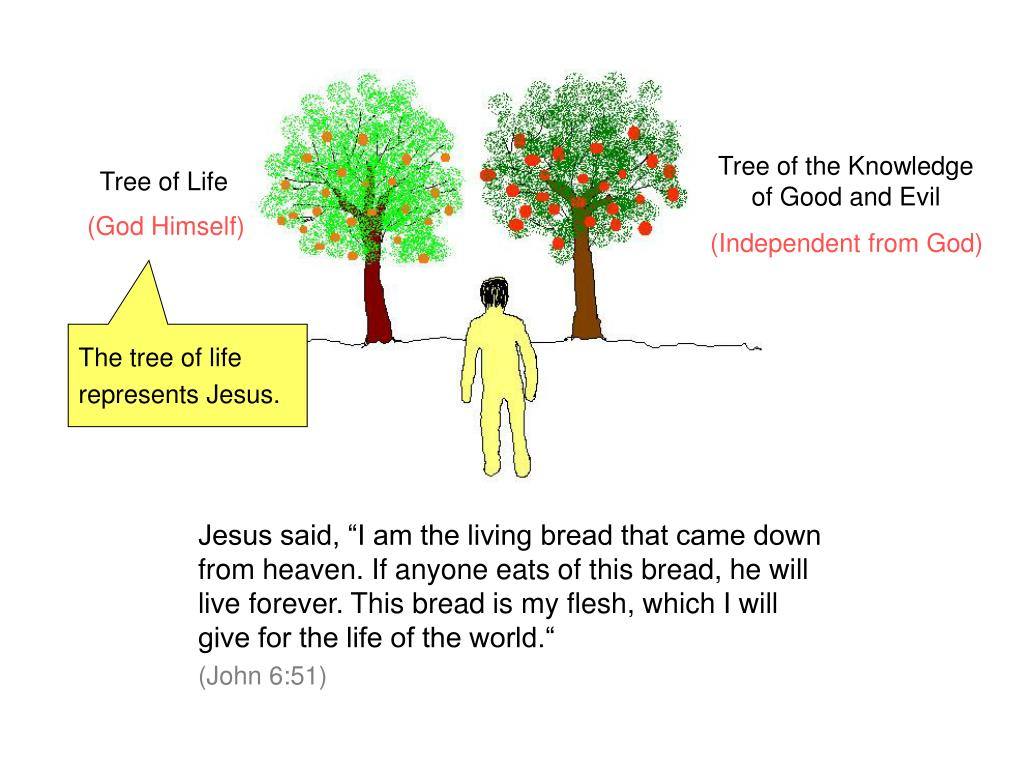 PPT - Basic Principles of the Bible Two Trees PowerPoint