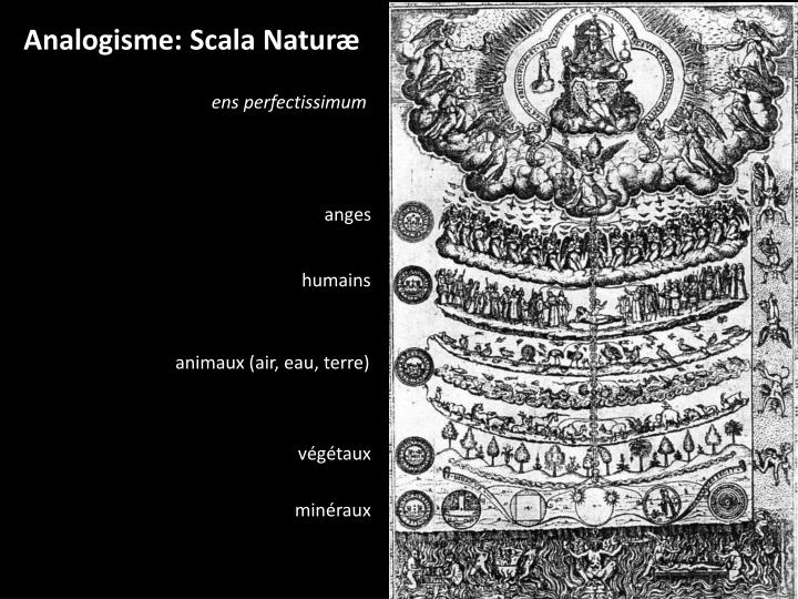 Analogisme: Scala Naturæ
