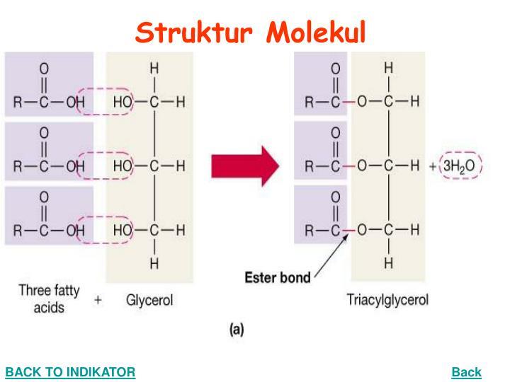 Struktur Molekul