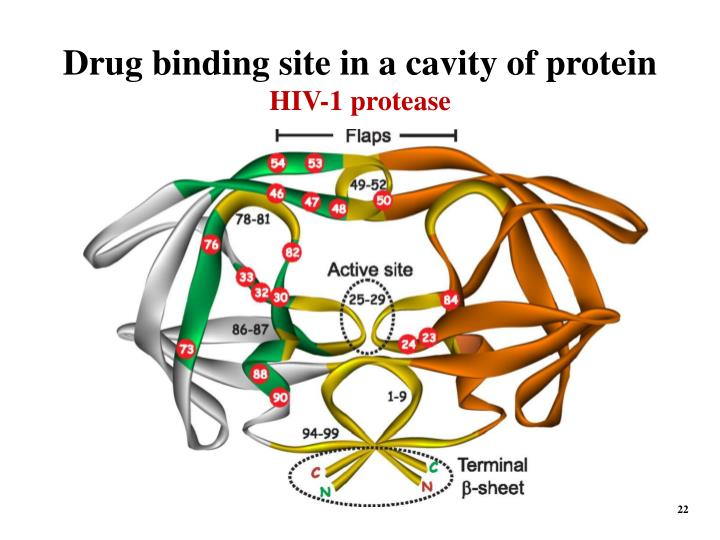 Drug binding site in a cavity of protein