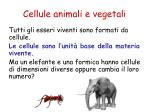 cellule animali e vegetali