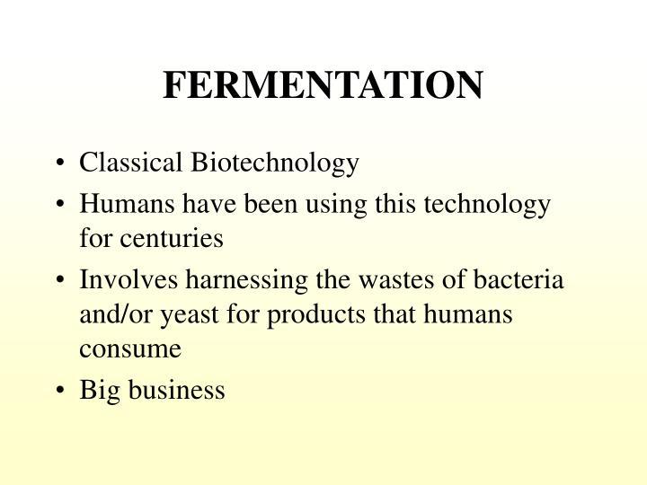 fermentation n.