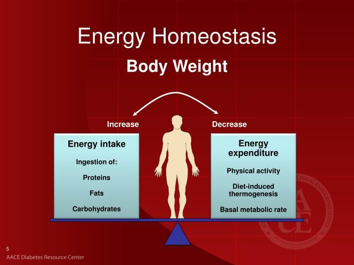 Energy Homeostasis