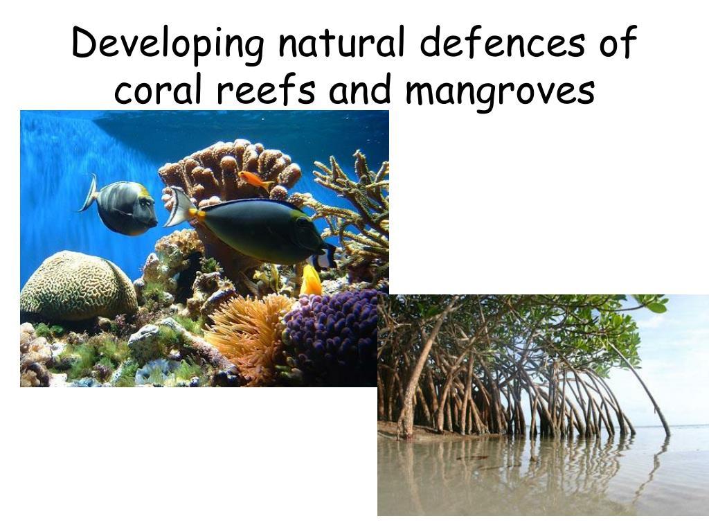 Integrated Coastal Zone Management, Belize