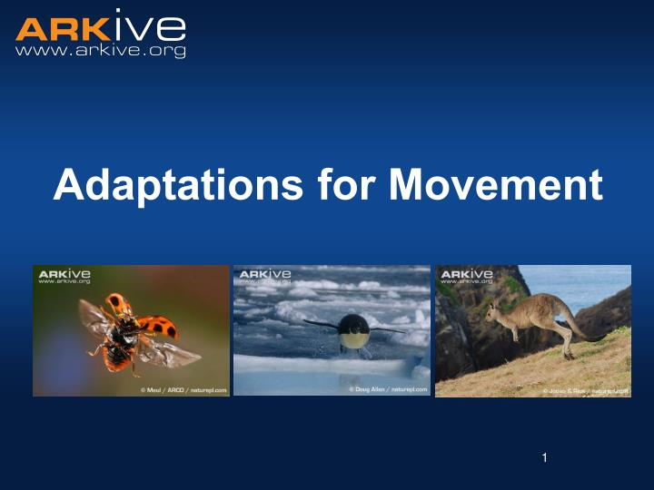 adaptations for movement n.