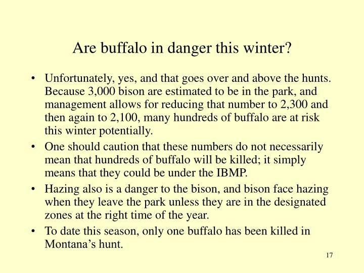 Are buffalo in danger this winter?