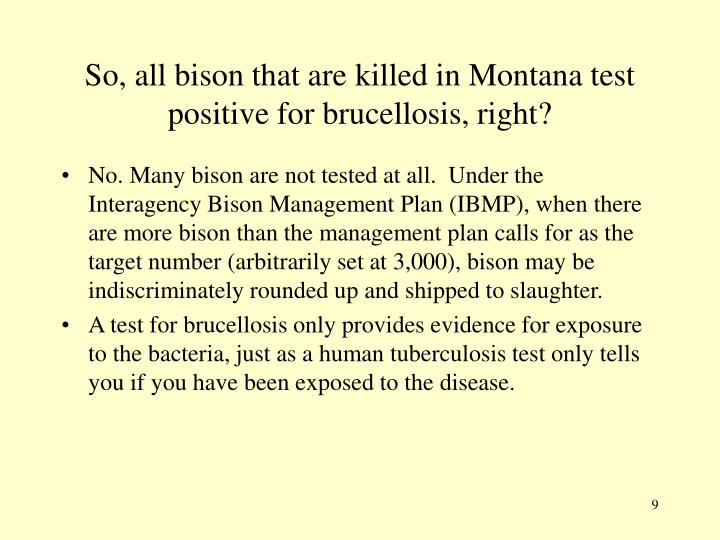 So, all bison that are killed in Montana test positive for brucellosis, right?