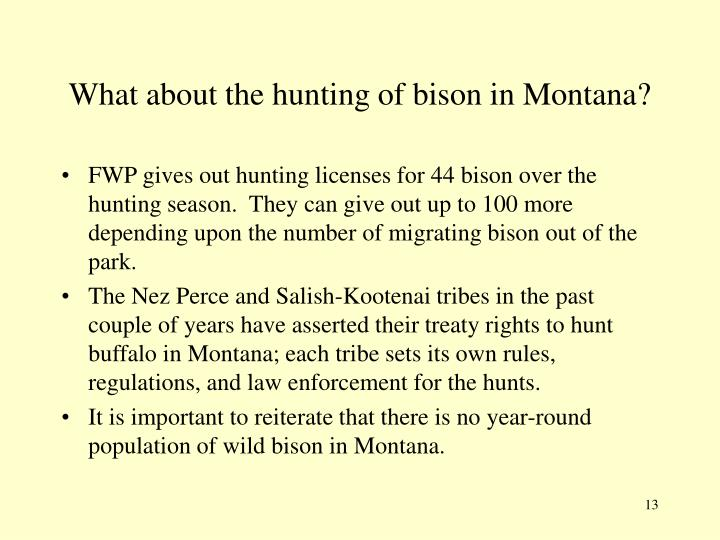 What about the hunting of bison in Montana?