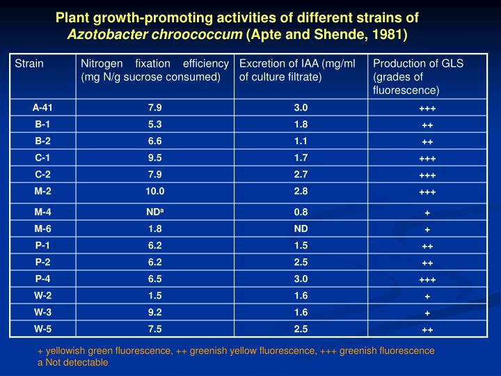 Plant growth-promoting activities of different strains of