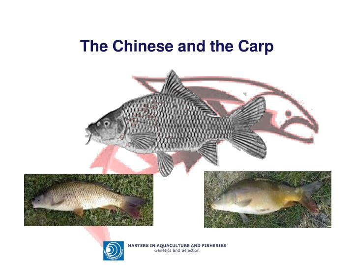 The chinese and the carp