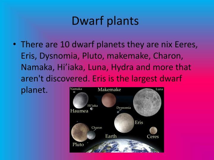 Dwarf plants