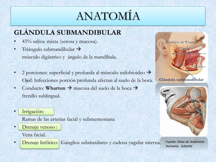 PPT - Patología de las glándulas salivales hecha fácil PowerPoint ...