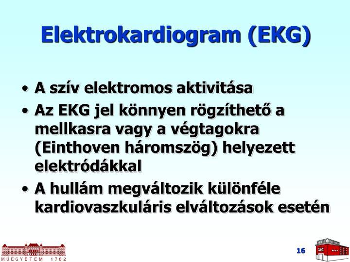 Elektrokardiogram (EKG)