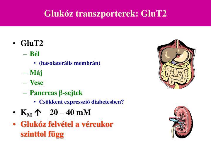 Glukóz transzporterek: GluT2