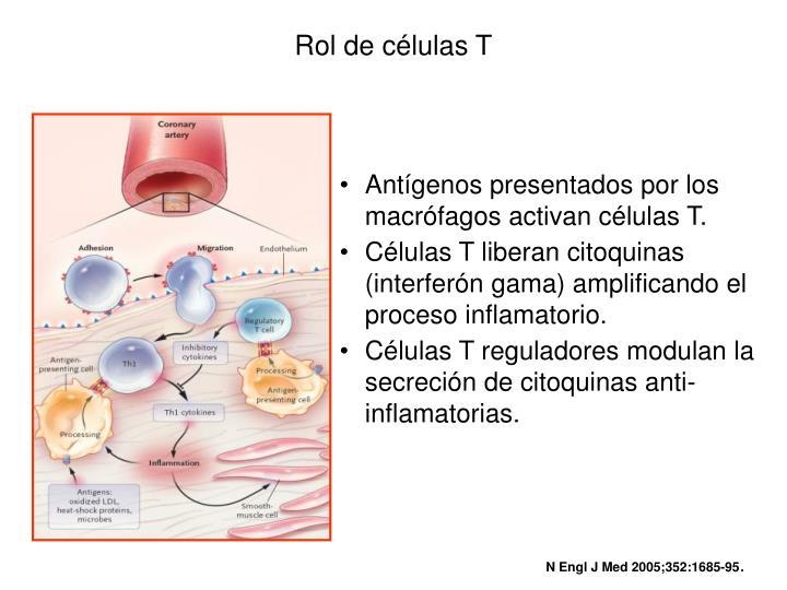 Rol de células T