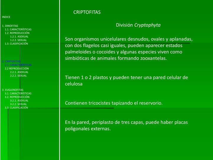 PPT - Sistemática de Dinofita, Criptofita y Euglenofita PowerPoint ...