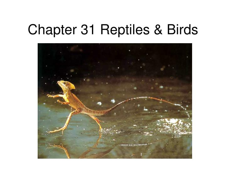 chapter 31 reptiles birds n.