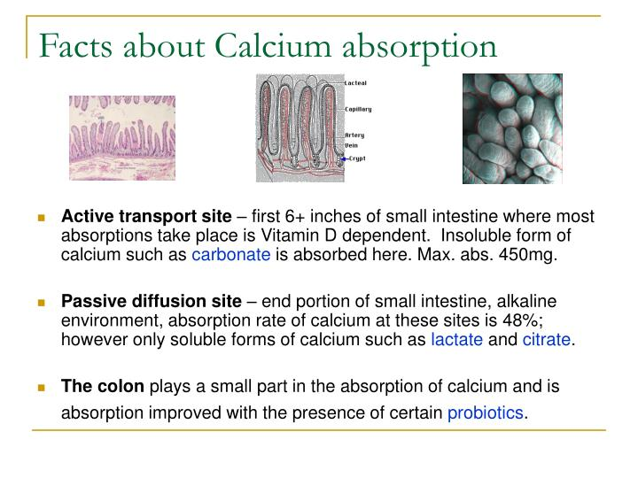 Facts about Calcium absorption